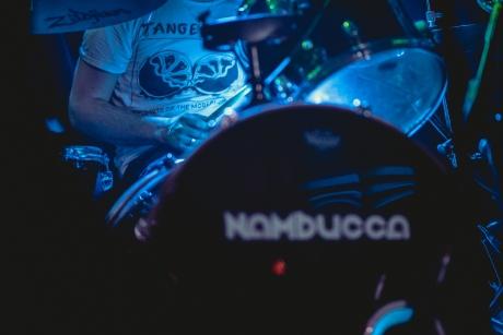 Tiger Mimic at Nambucca-02